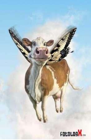 Las vacas que vuelan el Missipi